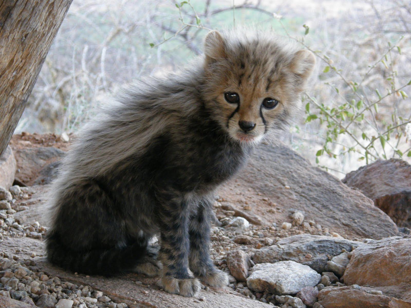 Animals In Savanna And Grassland Biomes